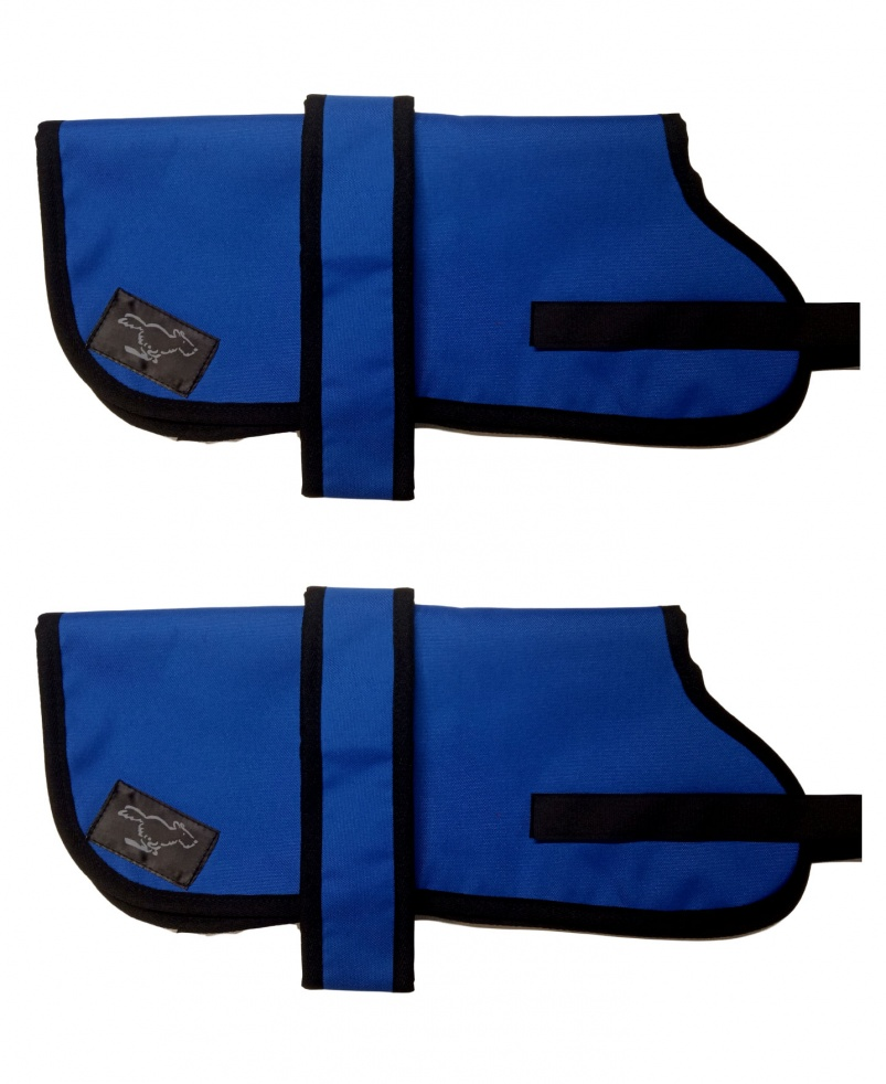 Australian Cattle Dog Personalised Waterproof Dog Coats | Royal Blue